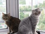 Two Cats on a windowsill