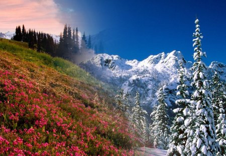 Winter To Spring - flowers, blooms, sky, mountains, collage, trees, snow, winter, spring, season