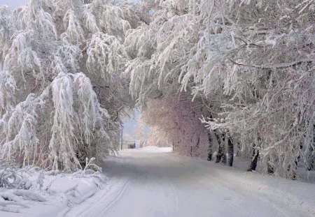 Winter arches