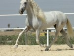 Spectacular Andalusian