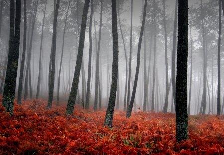 bloody fog - bloody, fog