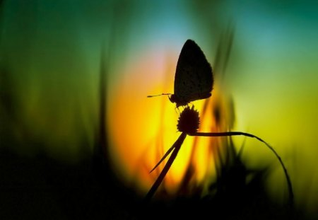 Butterfly at Sunset - butterfly, macro, nature, sunset, animals, insects