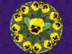 Pick-me-up Pansy