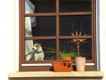 ♥     Dog At The Window     ♥