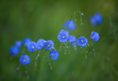 Blue wonders - green, grass, flower, nature, spring, wonder, blue