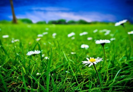 Green grass and white flowers grass nature background wallpapers green grass and white flowers mightylinksfo