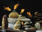 Five fish and stones