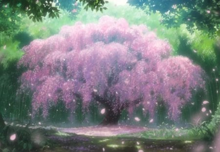 Anime cherry blossom other anime background wallpapers - Anime cherry blossom wallpaper ...