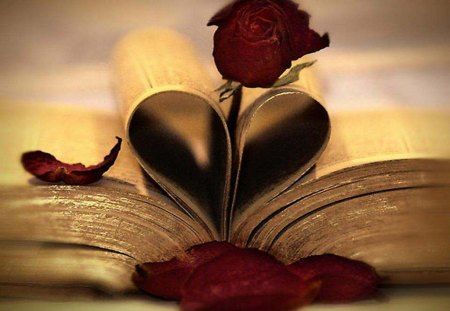 The Book Of Love - photography, rose, abstract, heart, book