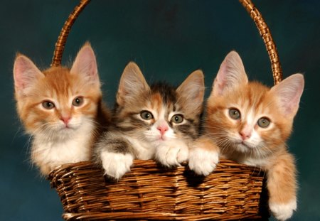 3 little kittens lost there mittens - kittens, lost, mittens, cats