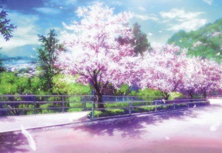 Cherry Blossoms Path Other Anime Background Wallpapers On