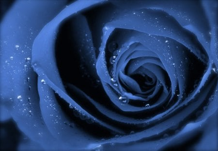 Blue Rose Upclose - photography, water, rose, water drops, flower, blue rose, upclose, blue