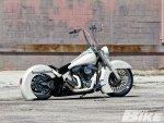 Softail Sex Appeal