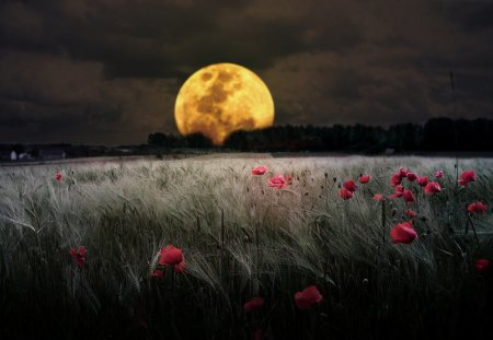 Romantic Moon - red flowers, horizonte, light, pink, dark, amazing, image, lightness, awesome, brightness, amber, flowers, sky, ambar, moonlit, scene, forests, cool, ight, clouds, fullscreen, scenario, gray, grass, fields, grasslands, golden, panorama, gold, paisagens, poppies, country, moon, plants, countryside, y, scenic, nice, pink flowers, trees, bright, beauty, beautiful, moonlight, view, picture