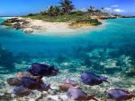 Tropical Island Corals & Fish
