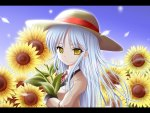 kanade sunflower