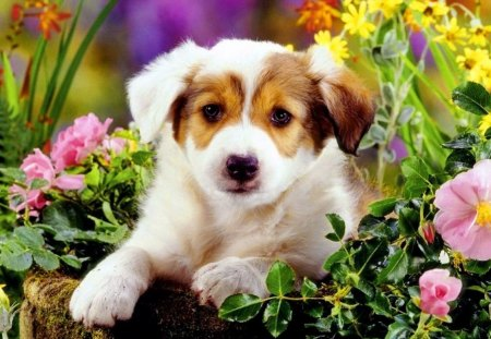 Cute Puppy Dogs Animals Background Wallpapers On Desktop Nexus Image 1333052