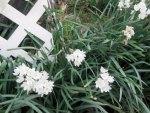 Weed Flowers xD