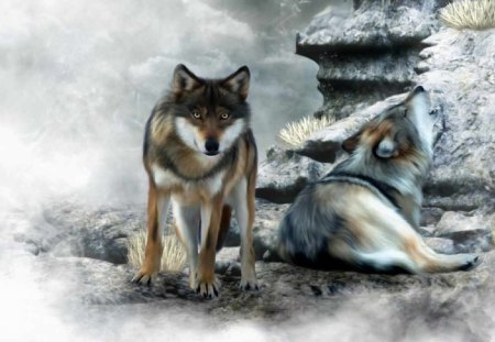CUTE WOLVES - splendid, grass, together, beautiful, howl, seasons, canine, glanced, frosty, paintings, wild, love, beauty, forests, couple, pair, animals, lovely, black, hunters, winter, predator, cute, snow, lover, nature, wolf, wolves, white, frozen, dogs