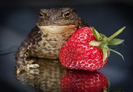 Toad And Strawberries - fruit, cute, strawberry, funny, toad, animals