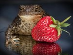 Toad And Strawberries