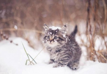 It's so cold! Brrr! - cute, snow, funny, white, cat, kitten, animal, winter