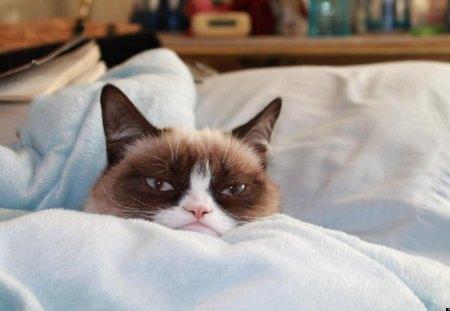 Grumpy Cat - Tartar Sauce, Grumpy Cat, Cat, cute