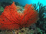Colorful Ocean Corals & Fish