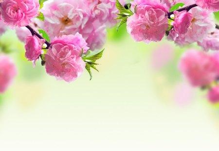 Very Nice - flowers, lovely, spring, pink, roses, season, very nice