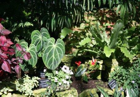 Amazing Day At Edmonton Garden 04 Flowers Nature Background