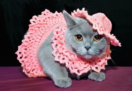A cat well dressed - fur, adorable, cat, pink, yellow eyes, cute, animal, dress, hat, grey