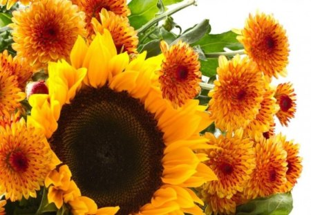sunflowers - yellow, flowers, nature, sunflowers