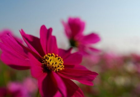 Spring Day Flowers Nature Background Wallpapers On Desktop