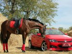 Beautiful Horse and Red Car