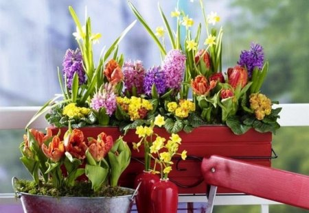 Spring flowers - hyacinths, colorful, various, spring, seasons, primrose, differit, flowers, garden, nature, tulips, natural