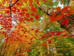 autumn colored forest