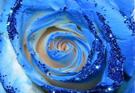 Blue - flower, flowers, rose, blue