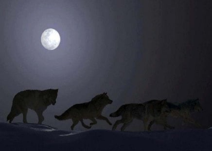 Free Spirited - wolves, moon, dogs, animals