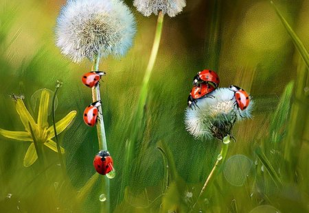Spring in the meadow - grass, dandelions, flowers, spring, ladybugs, meadow