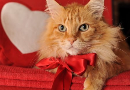 Cute kitty on Valentine' Day - kitty, animals, cat, pet, heart, valentines day, cute