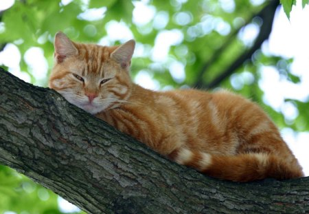 Ginger Cat On Tree Cats Animals Background