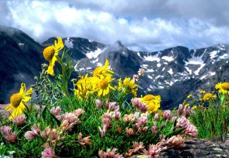 Tundra flowers flowers nature background wallpapers on desktop tundra flowers mightylinksfo