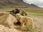 soldier and labrador