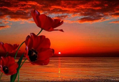 ♥ Red Sunset ♥ - red, flowers, beauty, nature, sunset, sky
