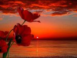 ♥ Red Sunset ♥