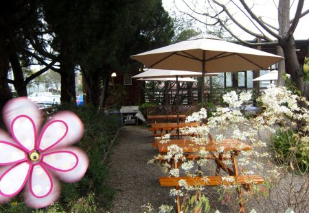 Garden restaurant - flower, wooden chair, Garden, restaurant