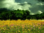 ✿.Spring Blooms in Meadow.✿