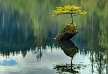 Survivor - growth, grow, ripple, plant, beautiful, log, tree, water, root, Survivor, moss, reflection, gren
