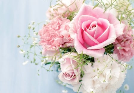 Pink Pastel Flowers Amp Nature Background Wallpapers On