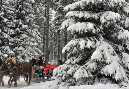 horse drawn carriages in german winter forest - forest, riders, horses, carriages, winter